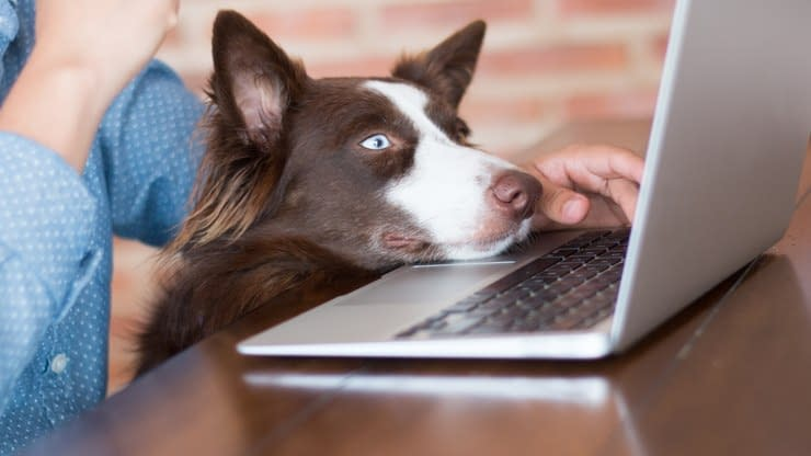 Treine o cão para conviver no ambiente de trabalho pet friendly - Dicas