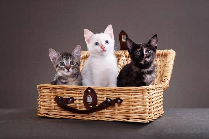 Uma lista com produtos bacanas para gatos e gateiros