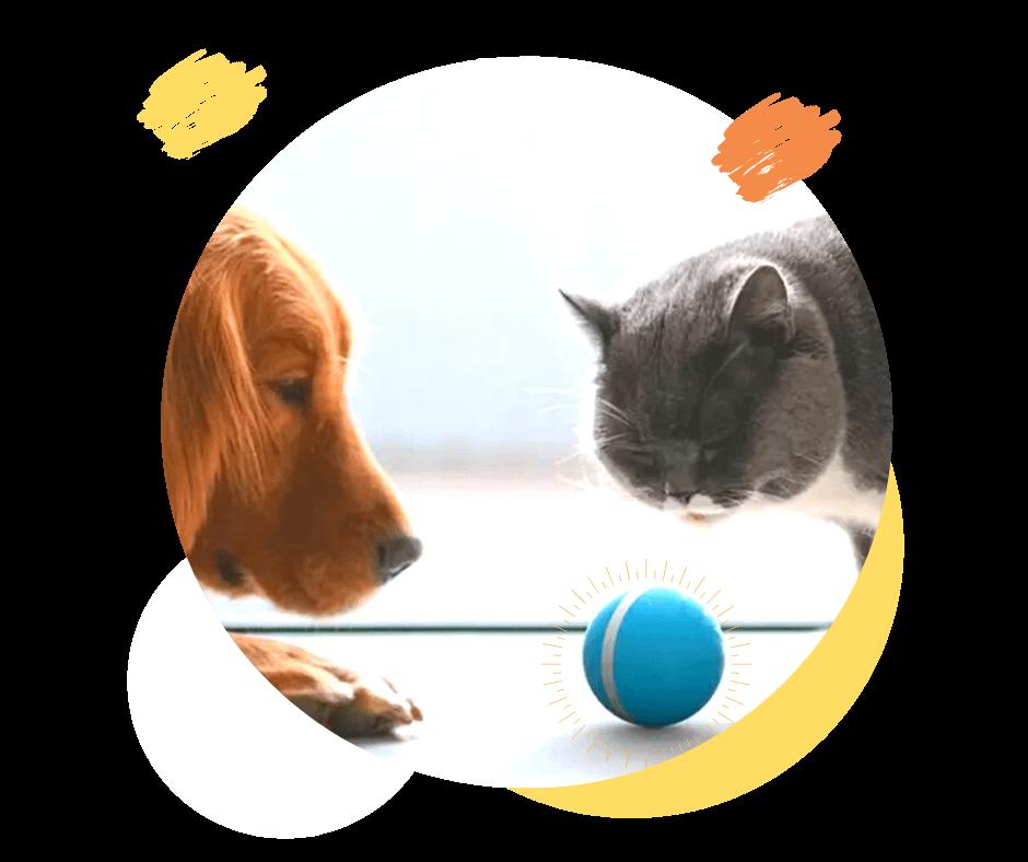 Smart Pet Ball – O melhor brinquedo para seu Pet – Bola Inteligente a Prova Dágua, com LED e Movimento