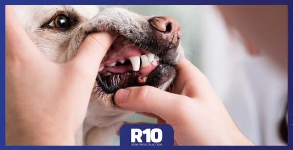 Brinquedos e petiscos rígidos podem fraturar os dentes dos cães