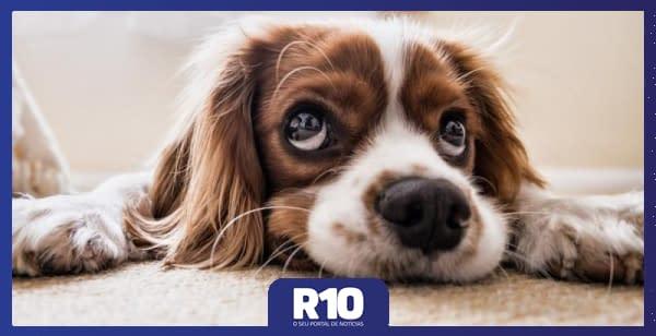 falta de atividade pode deixar pets ansiosos
