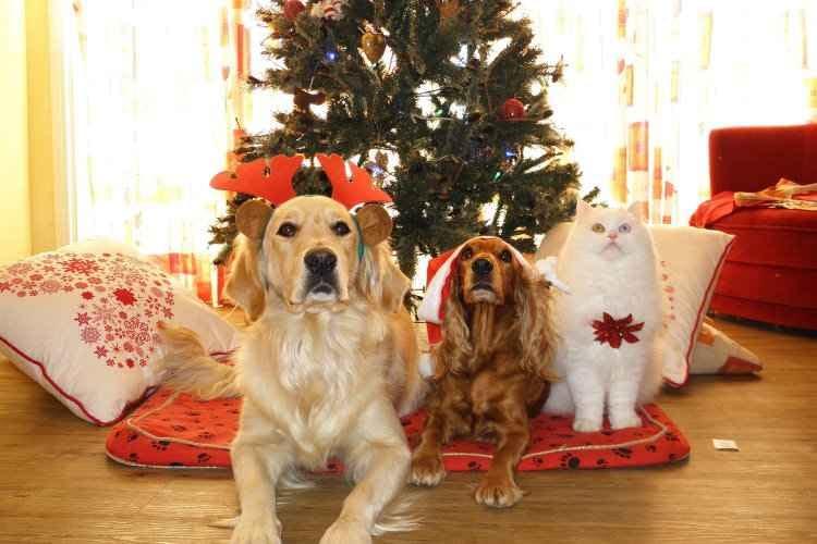 Decorao de Natal pode ser perigosa para cachorros e gatos