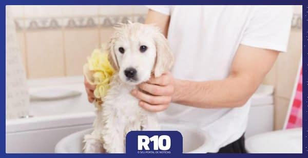 Confira quais os cuidados para ter com seu pet durante a quarentena