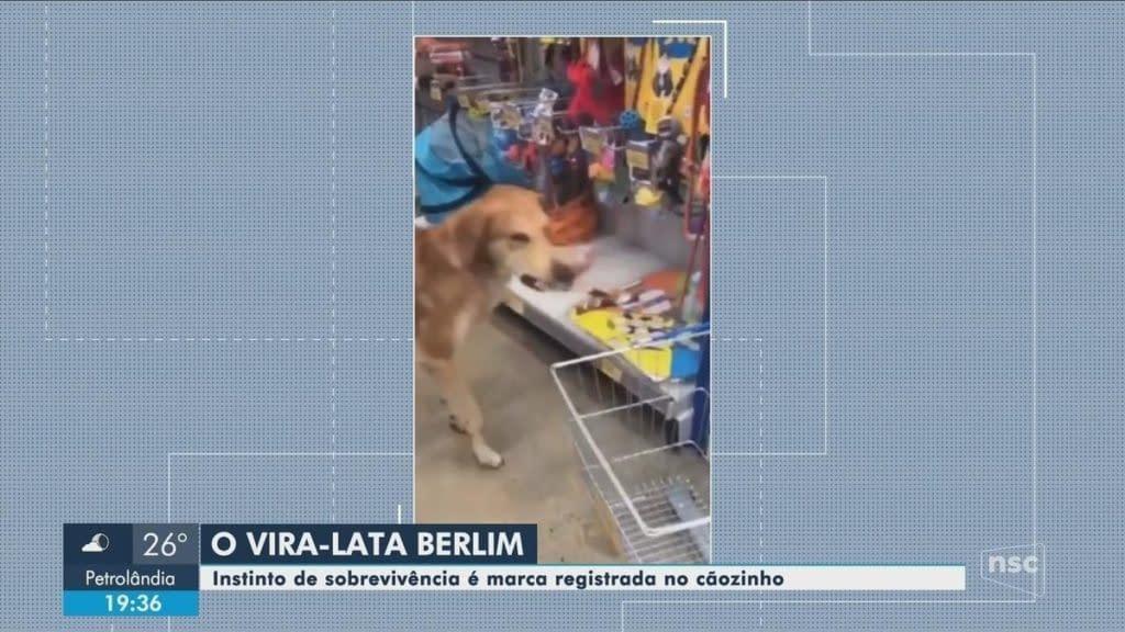 Cachorro 'rouba' pet shop em Balneário Camboriú   Santa Catarina