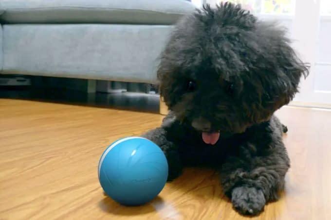 Pets: Cachorro furta brinquedo de loja e volta para devolver – assista aqui